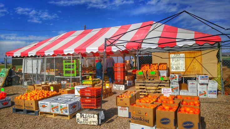 Yuma farmers markets by Andrea Cote