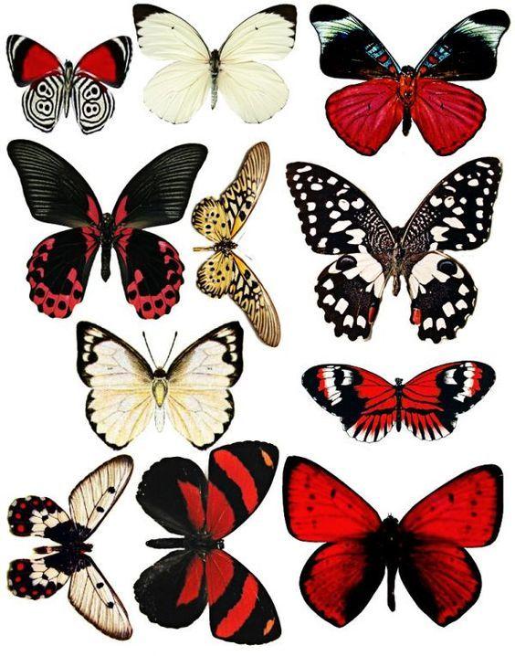 szablony motyli, wycinanki - motyle, papierowe wycinanki, papierowe motyle, paper butterflies patterns, paper cutouts
