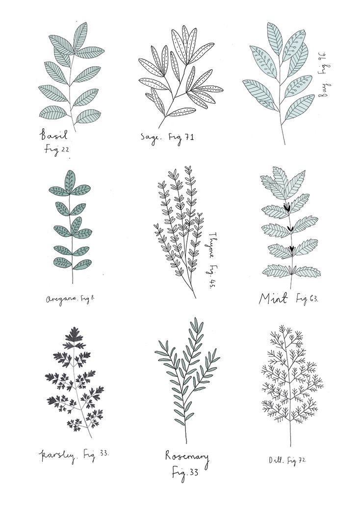 Herb Print. By Ryn Frank - I think these are really nice examples of really crisp and clear drawings
