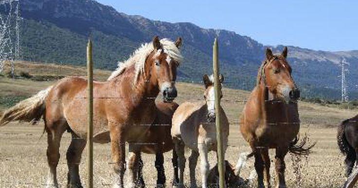 Cómo determinar la raza de un caballo. Cómo determinar la raza de un caballo. Ya sea que tu interés por los caballos sea personal o profesional, vale la pena ser capaz de reconocer las diferentes razas. El Registro Americano de Categorías de Caballos tiene una lista de 15 razas reconocidas. Existen organanizaciones dedicadas a las diversas razas de caballos, las que comparten su ...