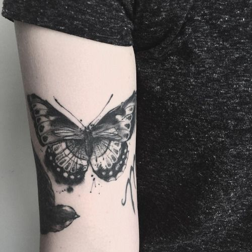 25 best ideas about tattoo papillon on pinterest les esp ces de papillons tatouage papillon - Tatouage de papillon ...