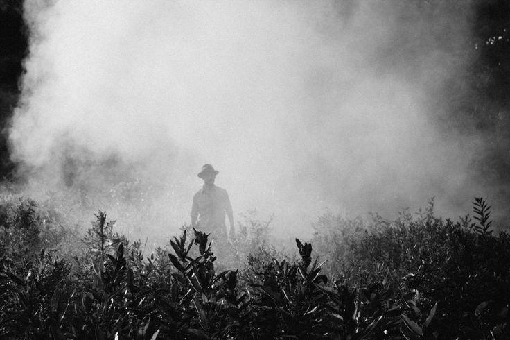 Fog, Steam, Person, Farmer, Spraying, Plants, Crops Photo - Visual Hunt