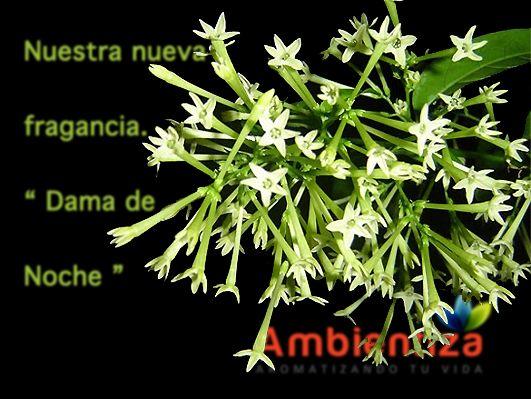 Marketing Aromático, ambientadores profesionales, ambientadores, aromatizadores, aromatizadores profesionales, aroma a dama de noche, dama de noche, olor a dama de noche, #ambientiza