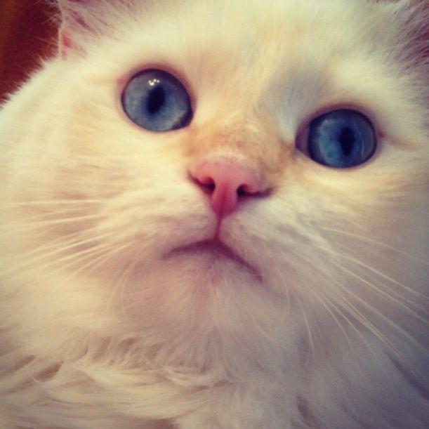 Dior! #eyes #catseyes #cat #siberiancat