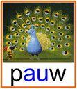 KERN 6: pauw