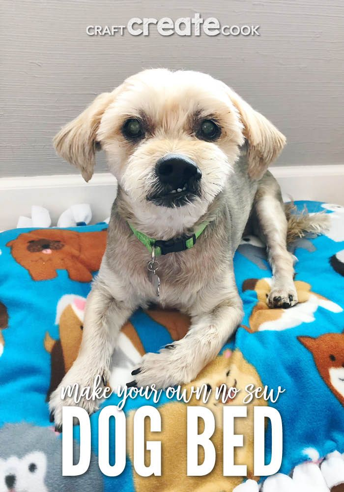 How To Make Your Own No Sew Dog Bed Best Pets For Kids Your Dog Dog Bed