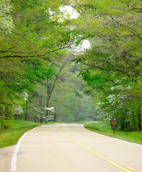 Looking for a scenic spring road trip? You'll find leafy, green scenery on the Natchez Trace in Mississippi. It's a soothing ride.