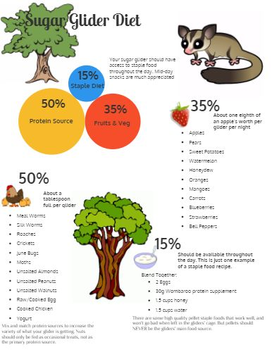sugar glider diet | Sugar Glider Diet - by Nathan Hall [Infographic]