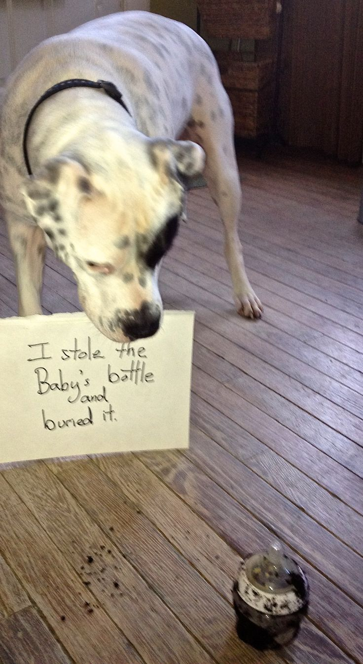 I stole and buried the babys bottle