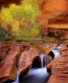 Coyote Gulch, Escalante: Amazing Photography, Fabulous Natural, Beautiful Places, Places I D, Incr Places, Utah So, Coyotes Gulch, Awesome Places, Gulch Trail