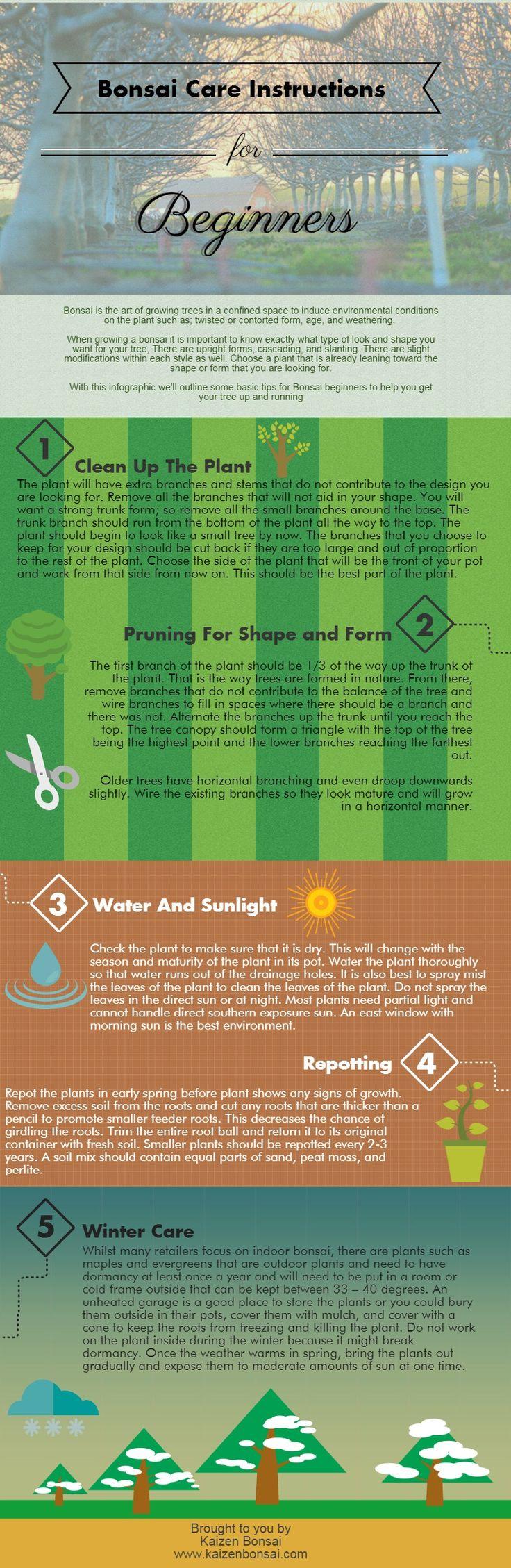 Bonsai Care Instructions for Beginners #bonsai #gardening | Created in #free @Piktochart #Infographic Editor at www.piktochart.com