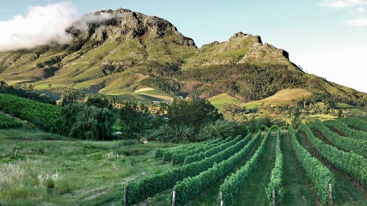 Stellenbosch_vineyards.jpg 1229×691 pixels