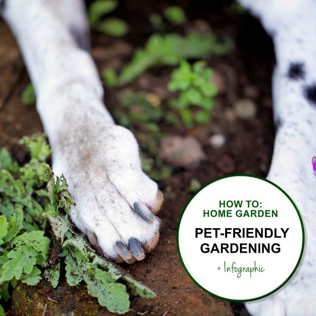 Green in Real Life: Ideas for the Home Garden - Gardening with Pets - Safely, Selection, Planning and More