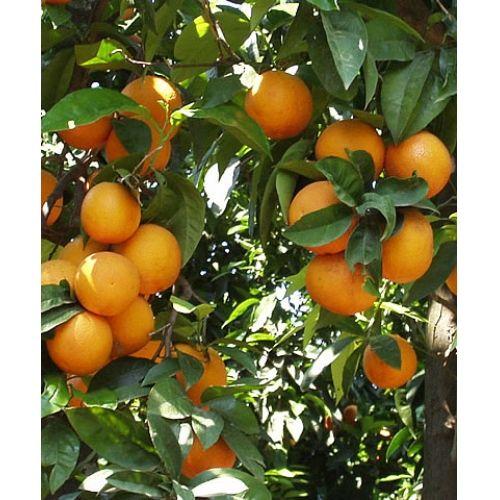 Arance Rosse 100% bio €3,20 al kg  http://www.nelsonsicily.com/dettaglio/arance-rosse-biologiche