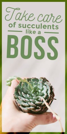 How To Take Care of #Succulents Like a Boss