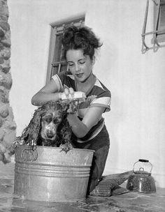 Elizabeth Taylor gives her Cocker Spaniel a good bath