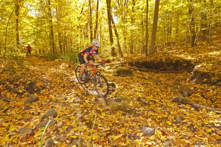 Mountain biking in the Ganaraska Forest offers an off-road cycling paradise. #cycling #fallcolours #trails http://www.northumberlandtourism.com/en/outdoor-adventure/Mountain-Biking.asp