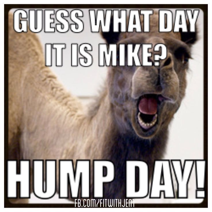 Hump Day Commercial | Hump day camel - this one's for you Dawn! | too funny