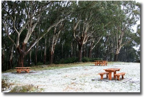 Snow in Mount Donna Buang on a winter's day in Melbourne - Australia compliments of http://www.flickr.com/photos/splatt/3250381050/in/photostream/