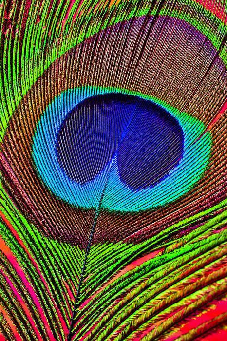 gay color birdhouse