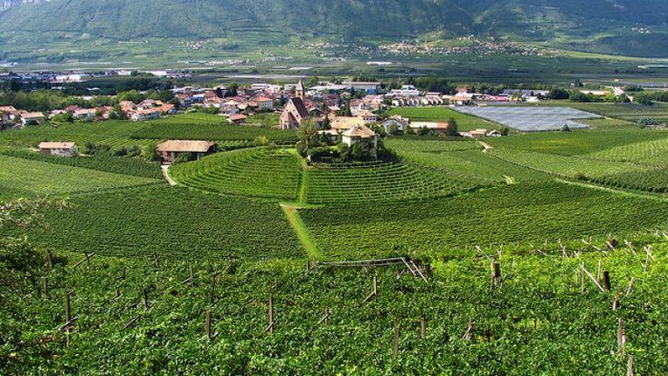 Vigneti sulle colline di Egna e Mazzon. http://winedharma.com/it/vitigno/egna-e-mazzon-la-patria-del-pinot-nero