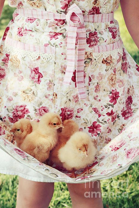 I remember when my Dad came home with a pickup bed of baby chicks for our chicken house, when we lived in the valley!