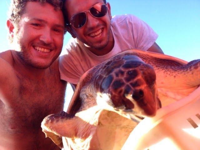 Red Sea Turtle Project - UK: Rescuing a turtle in Palmarola - by Luigi Ardire