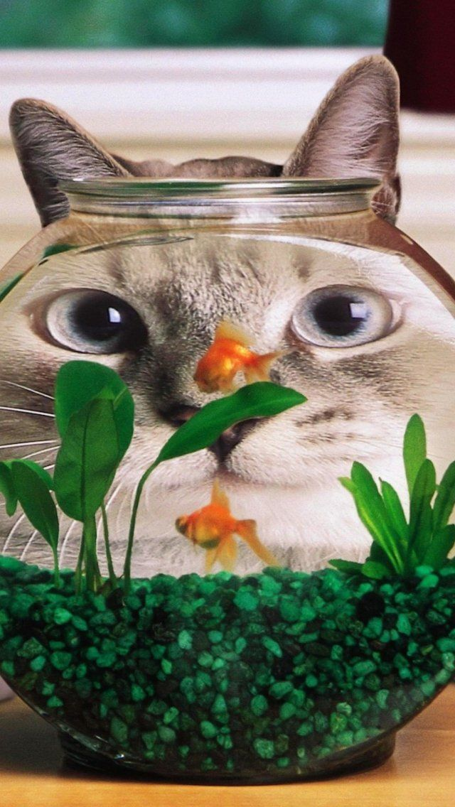 Gato engraçado No Vidro