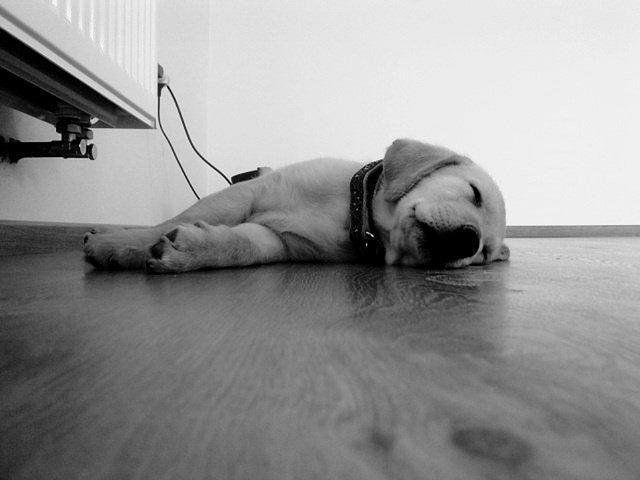Las fotos más tiernas de cachorros durmiendo, ¿con cuál te quedas? | Mascotas