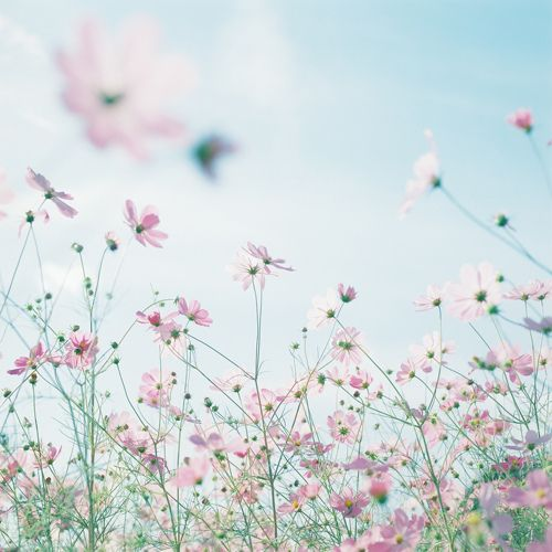 ✿ untitled by *haco* on Flickr.✿
