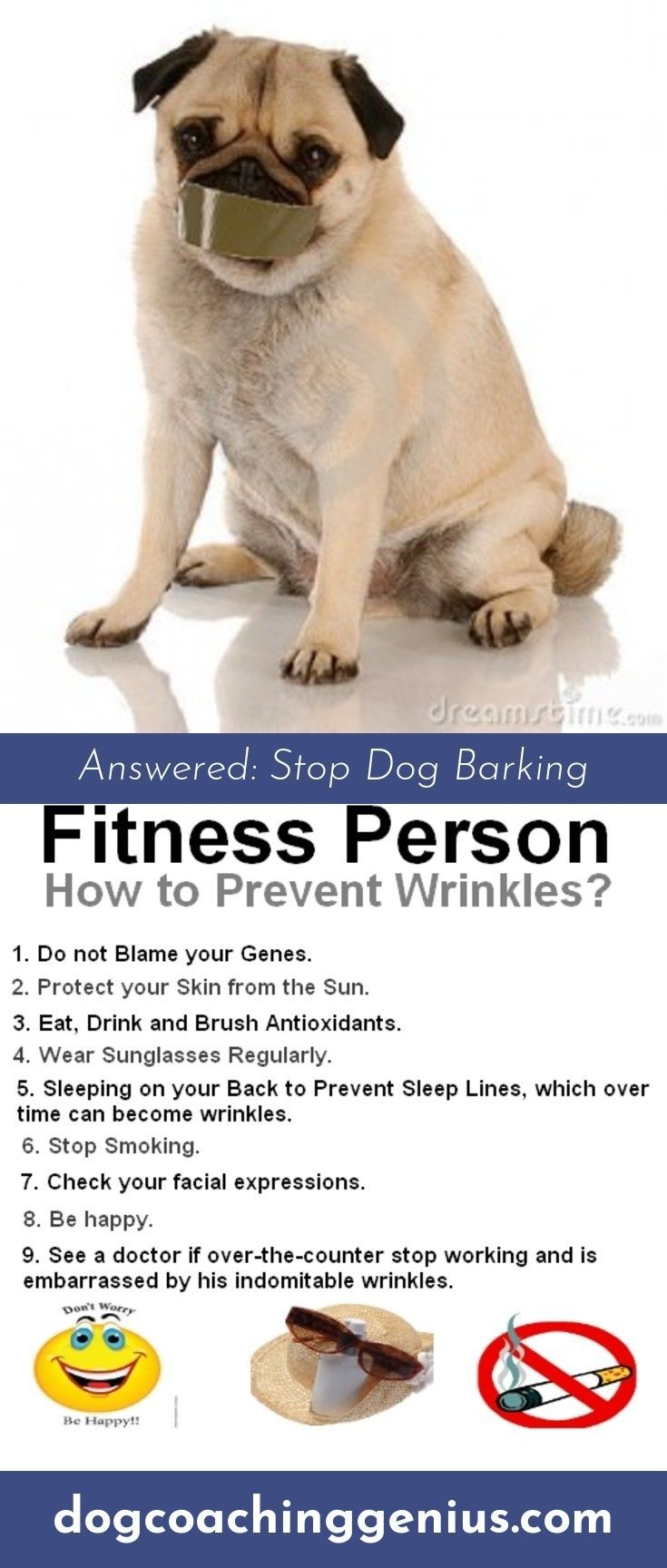 Want To Know More About Dog Leash Training Dog Leash Training Dogs Leash Training