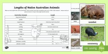 Australian Animals Measurement Activity Activity Sheet - worksheet, Australian Animals, reptiles, cloze passages, activity sheets, word search, research, fas