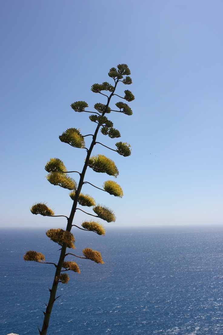 Plant in Nice
