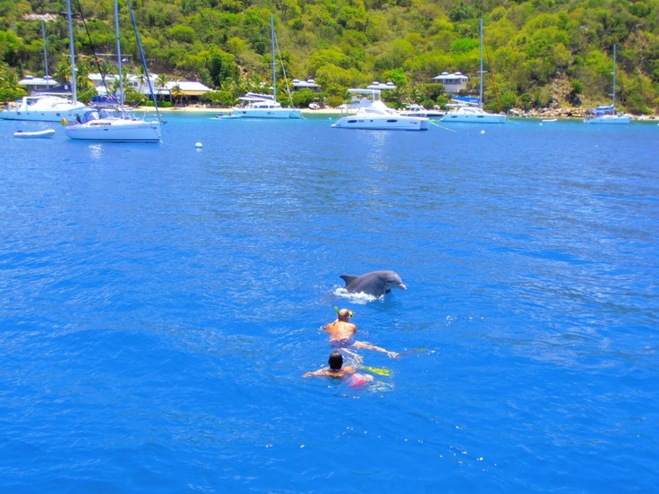 How amazing! Another great reason to visit Cooper Island Beach Club with Conch Charters.  If you are going to Cooper Island you may be as lucky as Jules was yesterday and get to swim with a beautiful dolphin