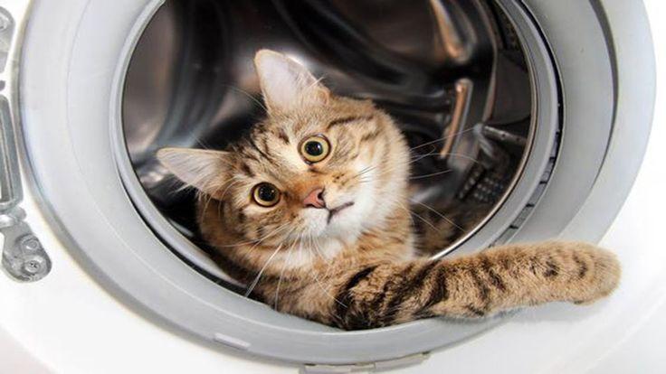 Funny Cats vs Washing Machines | Cat Fights Washing Machine Compilation