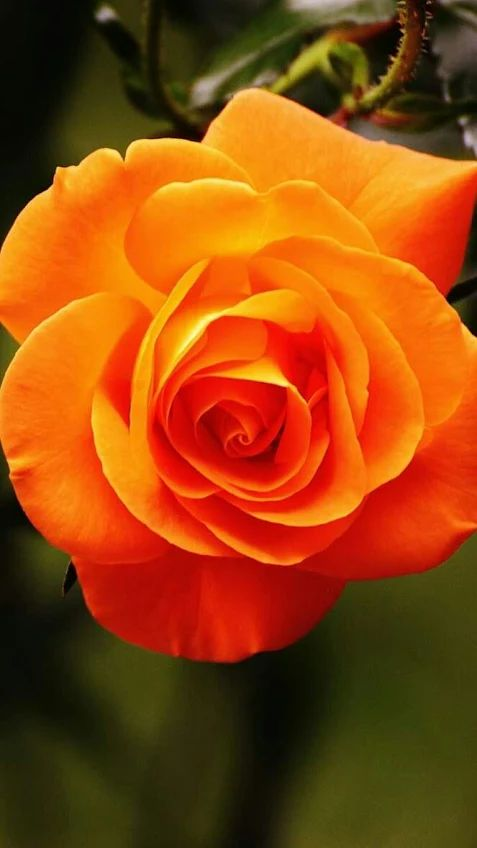 Best 25 Orange Flowers Ideas On Pinterest Flora Orange