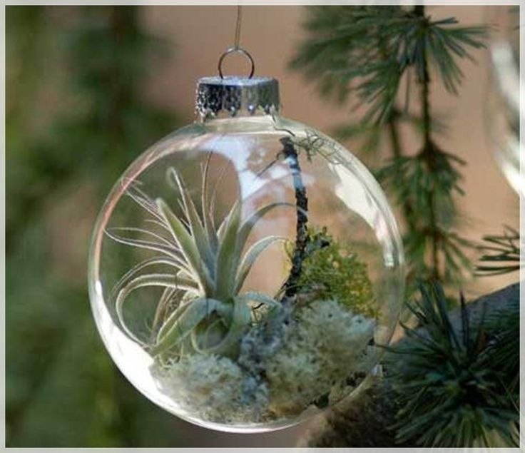 Creative Christmas Tree Ornament With Living Plant