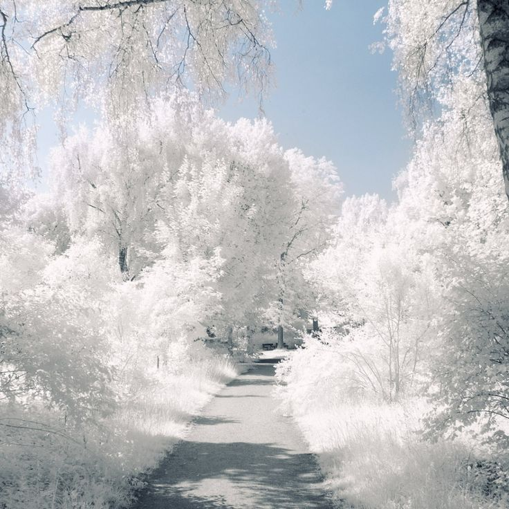 Wonderful White Winter Dreams