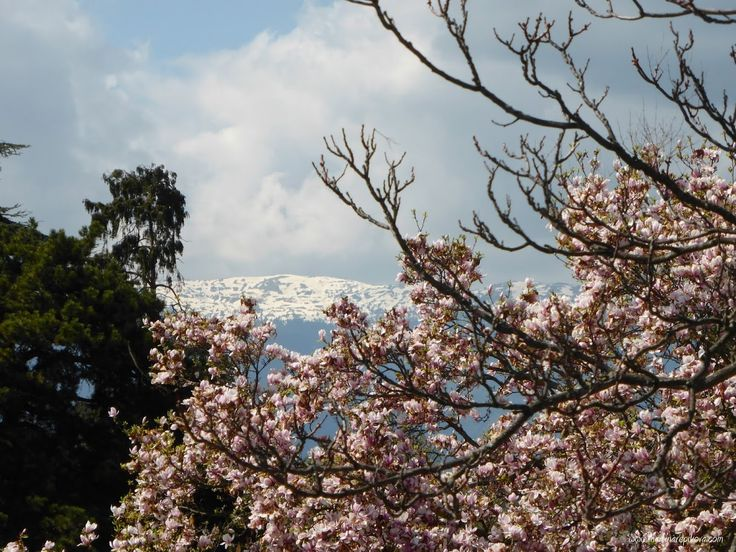 Greenery and mountains, Geneva, Switzerland