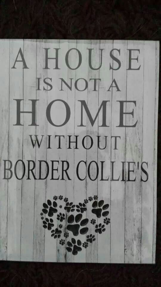 Border collie quote