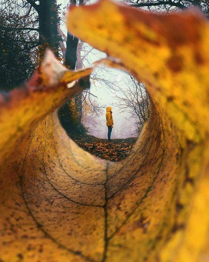 Dentro la fessura di un occhio dell'albero che cede socchiuso nell'aria come una pergamena ingiallita di clorofilla che si è arrotolata morbida tralascia uno spazio a tunnel con una finestra aperta in fondo che chiude la mia sagoma in piedi nel bosco mentre me ne sto tacente