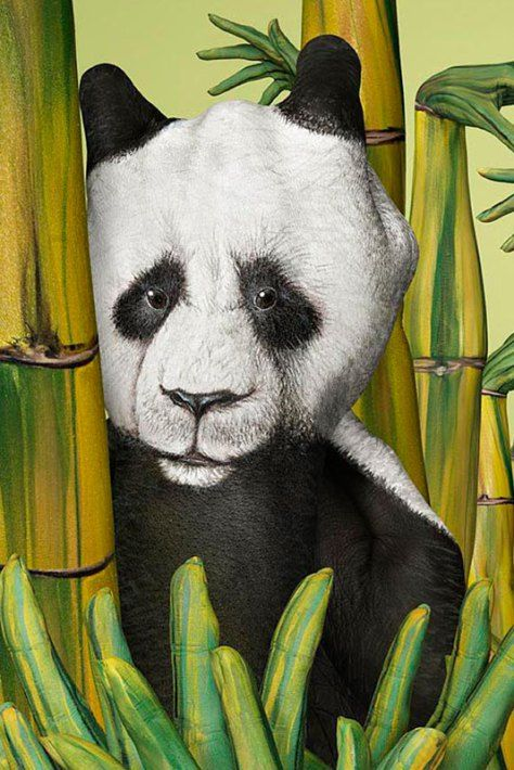 panda handpainting by guido daniele