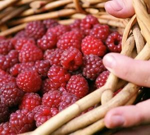 Mornington Peninsula raspberries