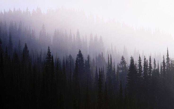 3840x2400 Обои лес, фон, хвойные, темнота, туман, мгла