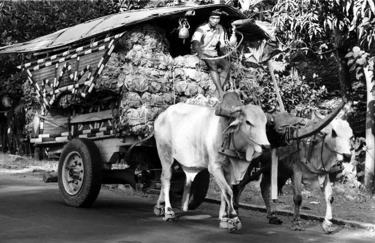 INDONESIA. Jogjakarta. 1969. Road traffic.