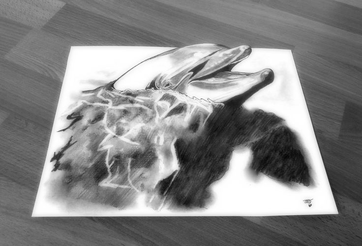 3D Portrait: Dolphin Approx. time: 12 hours Drawn with 5 different pencils...