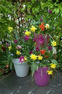 bloembollenlasagne