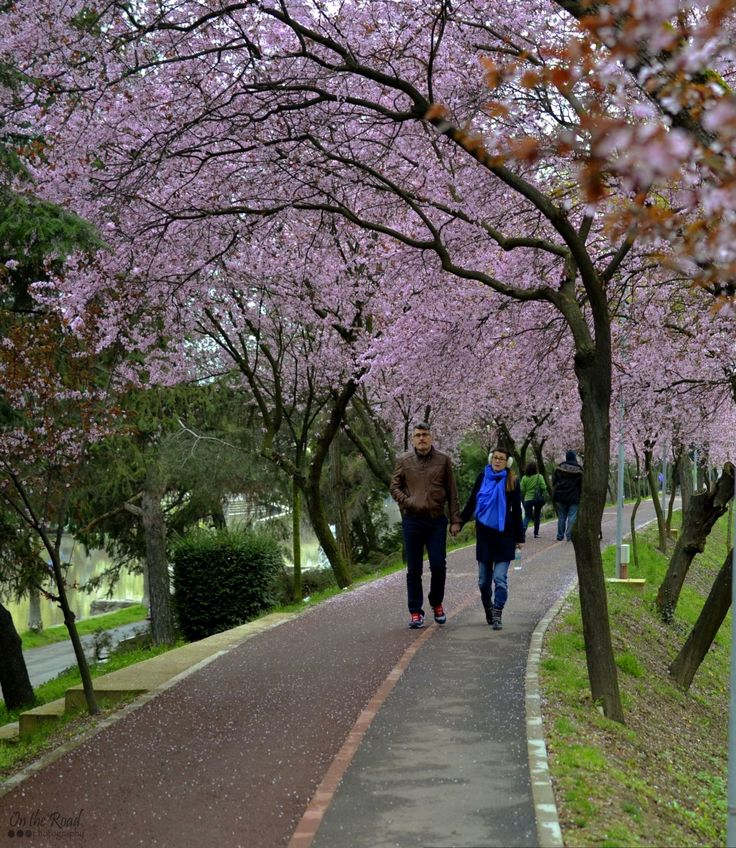 """One more from the """"pink alley"""" in Timisoara. This is really the perfect spot for a… walk in the park."""