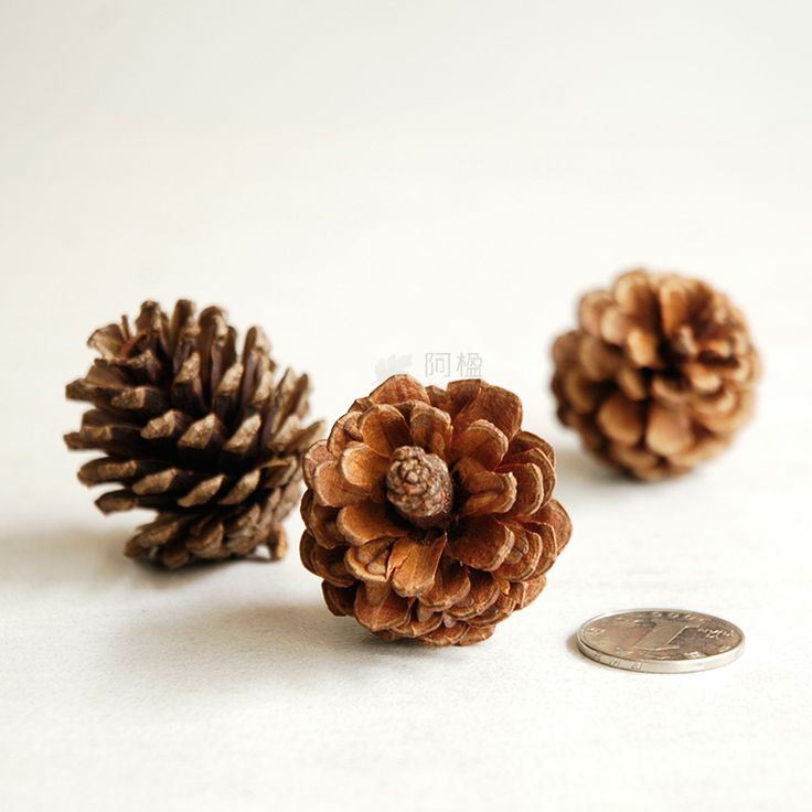 Compare Prices On Pine Cone Branch  Online Shopping/Buy Low Price .