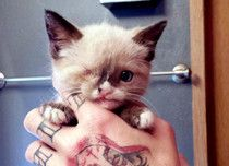 """""""Captain"""" Sir Stuffington The Kitten – A Raccoon Attack Survivor. How amazing is this little guy."""